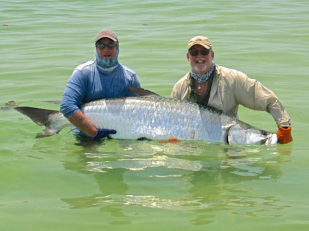 First tarpon on fly in St. Petersburg with Capt. Russ Shirley. For the latest see Salty Fly Charters Fly Fishing Reports