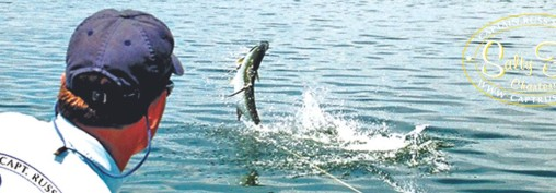 2015 Tarpon Season • Tampa Bay Fly Fishing Reports from Salty Fly Charters