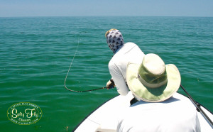 St. Pete Tarpon Fly Fishing