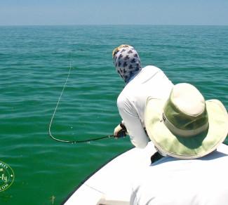 St. Pete Tarpon Fly Fishing