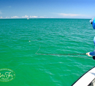 2016 Salty Fly Tampa Tarpon Fly Fishing Report
