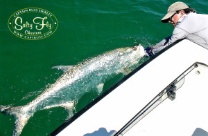 Largest male tarpon seen on the 'Salty Fly'.