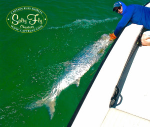 Brett McGreaham reviving large tarpon boatside Captain Russ Shirley of Salty Fly Charters in Saint Petersburg, Florida